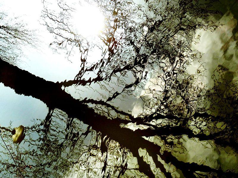 Tree Magic 5