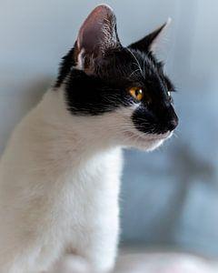 Schwarz-weiße Katze von der Seite, orangefarbene Augen