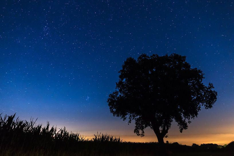 Silhouet boom met sterren  van Dennis van de Water