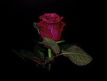 Roos van Jose Lok