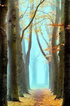 Brouillard Oublié sur Lars van de Goor