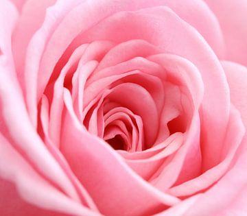 Roze roos in het vierkant (macro) van Fotografie Jeronimo