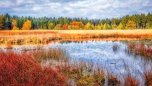 waanzinnige herfstkleuren in het bos van eric van der eijk