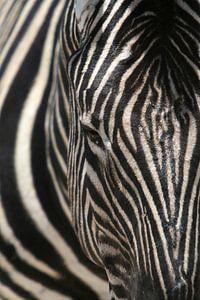 door de strepen de zebra niet meer zien