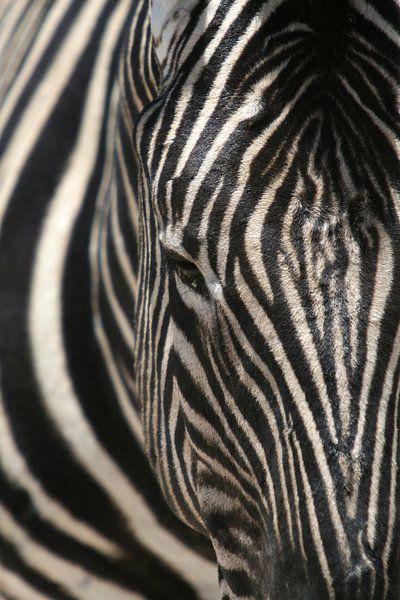 door de strepen de zebra niet meer zien van Vera Vondenhoff