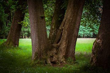 """""""Driesprong"""" boom van sandra ten wolde"""