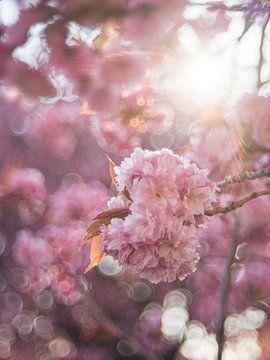 Japanische Kirsche von Patrick Verheij