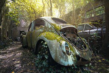 scarabée abandonné