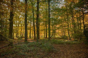 Herbstlicher Wald auf der Veluwe mit Bäumen in Rot, Orange, Braun, Gold und Gelb. von Compuinfoto .