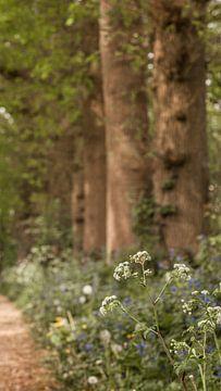 Pfeifenkraut am Rande des Fußweges von Mayra Pama-Luiten
