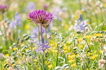 Wilde bloemen van Daan van Oort