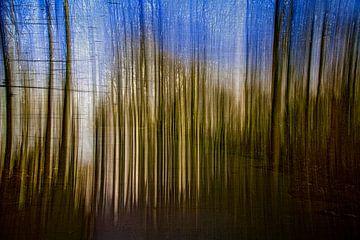 Surrealistisch bos van Eline Verhaeghe