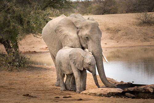 Elephant with calf van Thomas Froemmel