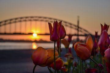 Tulpen voor de Waalbrug te Nijmegen van Femke Straten