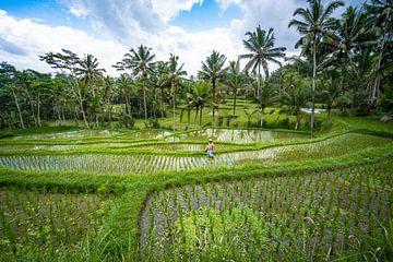 Un agriculteur au travail sur une rizière verte à Bali en Indonésie sur Jeroen Cox
