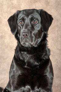 Labrador von Tony Wuite