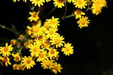 Gele Bloemetjes van Rosalie Broerze
