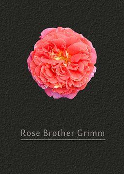 """Rose """"Gebrüder Grimm"""" von Leopold Brix"""
