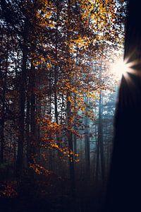 Gouden Herfst Bladeren van Wahid Fayumzadah