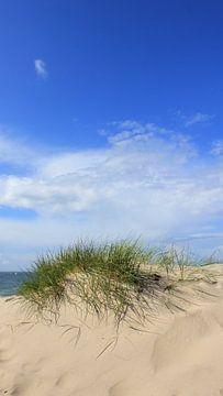 Mai am Strand von Ostsee Bilder