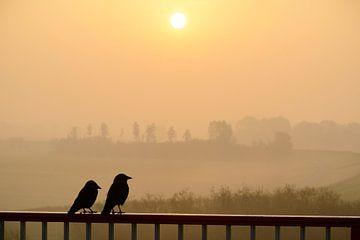 Ein Paar westlicher Dohlenvögel sitzt auf einem Geländer und beobachtet den Sonnenaufgang von Sjoerd van der Wal
