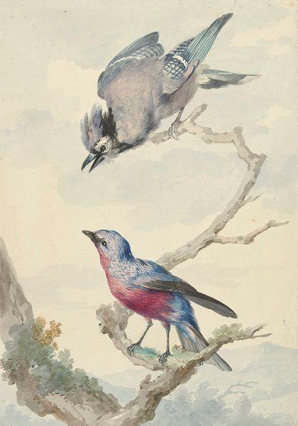 Zwei Vögel: ein blauer Eichelhäher und eine violette Brustkotinga, Aert Schouman von Meesterlijcke Meesters