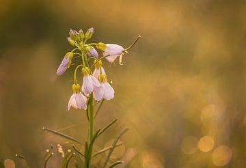 blühen in der frühen Morgensonne. von natascha verbij