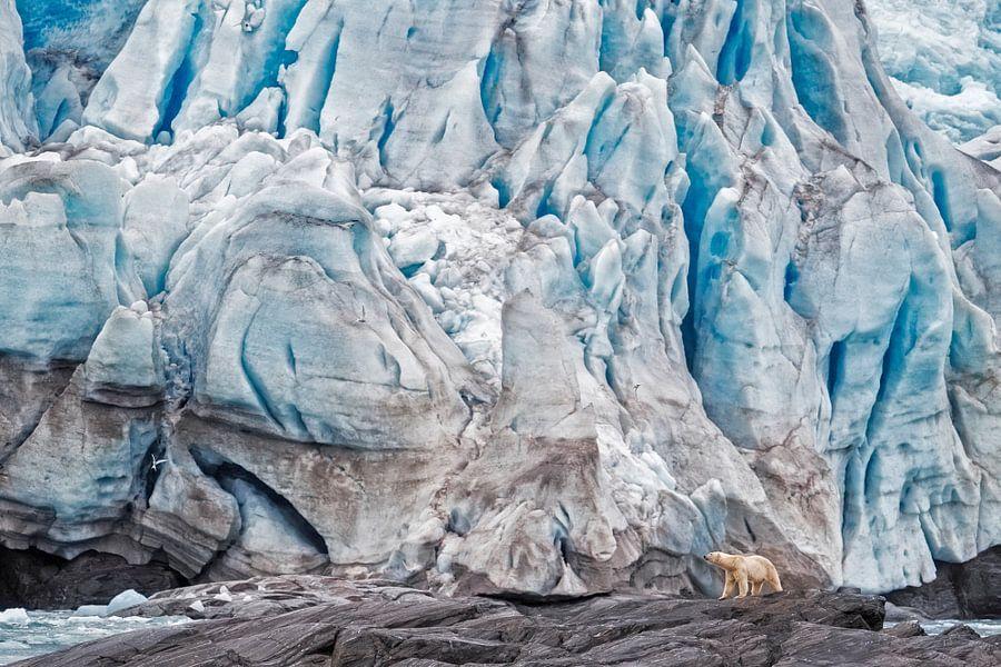 IJsbeer lopend voor de ijswand van een gletsjer op Spitsbergen