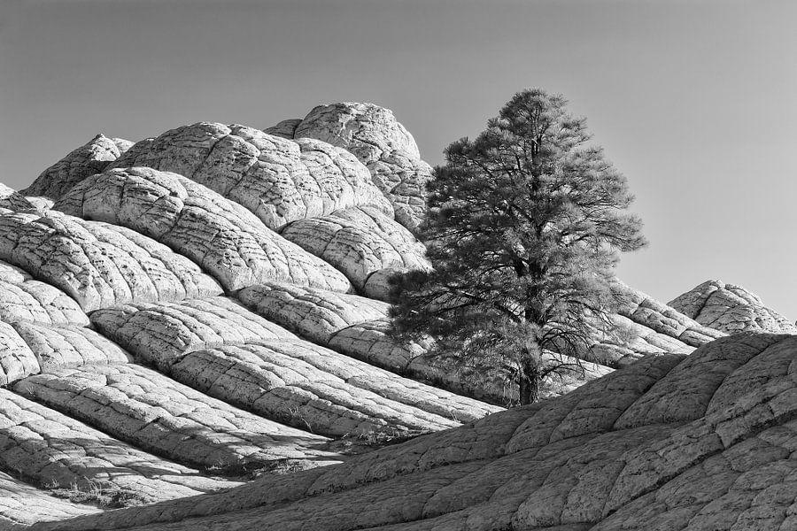 White Pocket van Henk Meijer Photography
