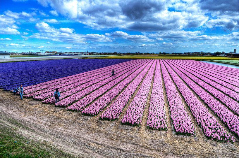 Bollenvelden in bloei van Wouter Sikkema