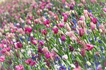 Blumenweide von Gerda Hoogerwerf