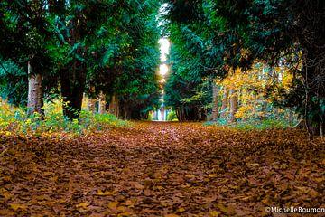 Durch den Wald von Michelle Boumon