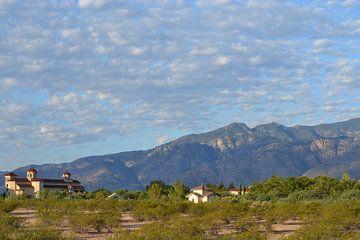 In de desert in Arizona van Bernard van Zwol