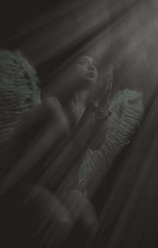 Engel 14 van