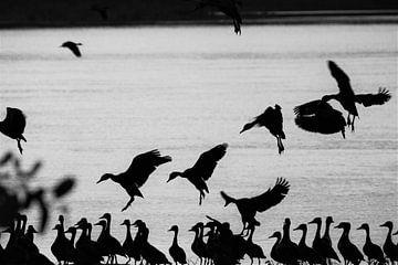 Ansicht aus der Vogelperspektive von Marije Zwart