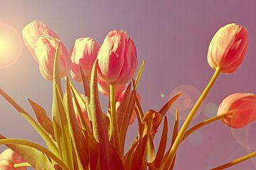 Tulpen in der Sonne digitale Kunst von Photography by Naomi.K