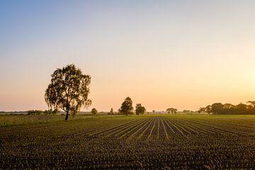 Akker bei Sonnenuntergang von Johan Vanbockryck