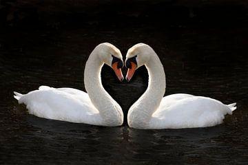Couple de cygnes en forme de coeur sur Gert Hilbink