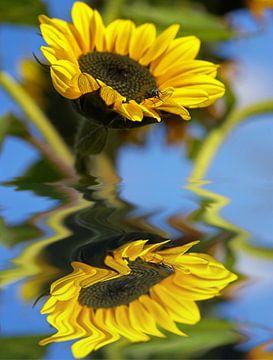 Sonnenliebchen van Vera Laake