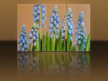Triptychon der blauen Trauben von Bob de Bruin