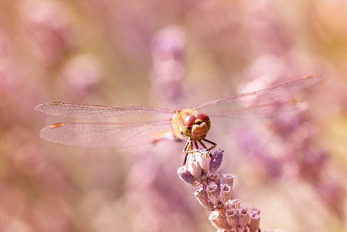 Sunbathing Between Lavender