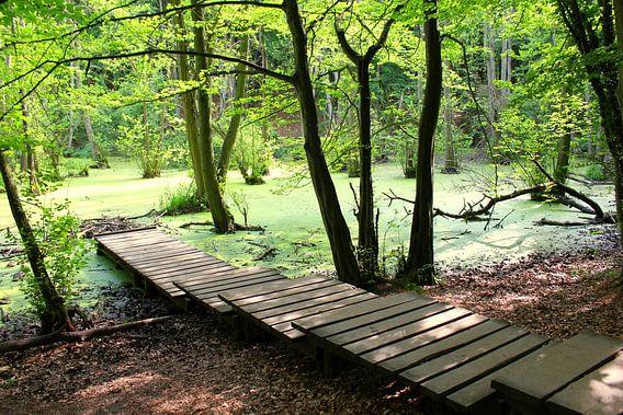 Grüne Oase van Ostsee Bilder