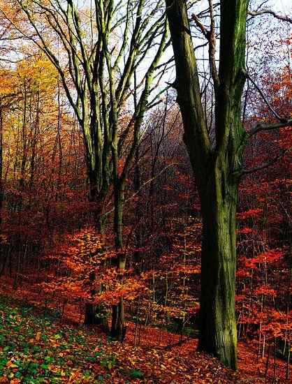 Herbst im Neandertal van Iwona Sdunek alias ANOWI