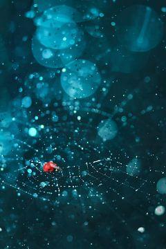 Itsy bitsy... ladybug? van Elianne van Turennout