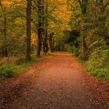 Bospad in de herfst van Patrick Herzberg