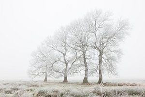 De vier marcherende bomen van