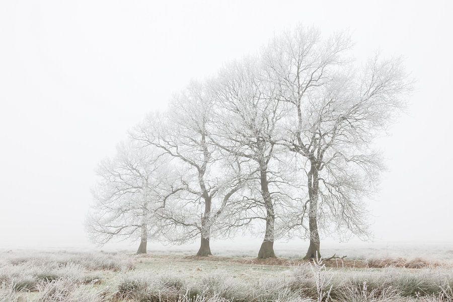 De vier marcherende bomen van Karla Leeftink
