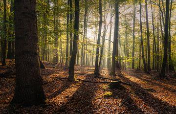 Elke boom heeft zijn schaduw van Joris Pannemans - Loris Photography