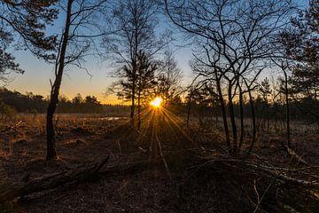 zonnestralen door de takken von Arjan Stunnenberg