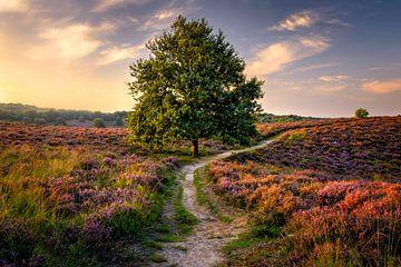 Boom op de Heide van Martijn van der Nat